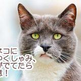 猫から人に感染する「コリネバクテリウム・ウルセランス感染症」ってなに?